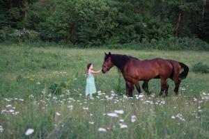 amish amelie horse