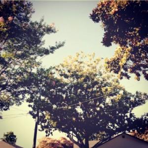 Liminality trees