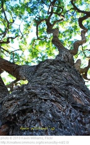 Family Liturgy: The Story ofZacchaeus