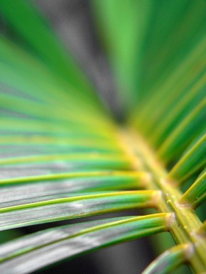 Mark 11: Telling the Palm Sunday Story Together